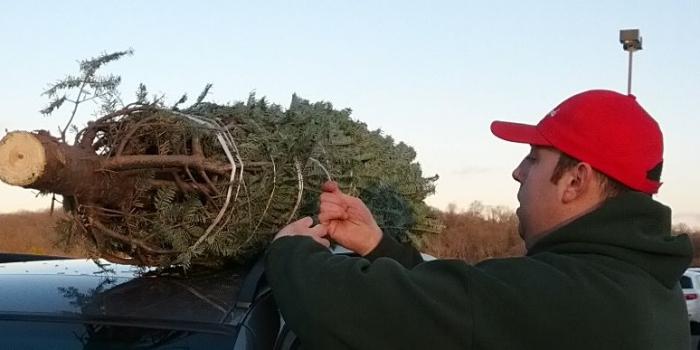 本物のモミの木でクリスマスツリー!