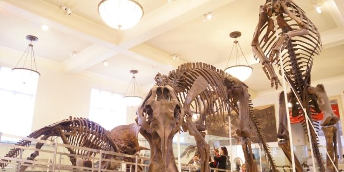 【American Museum of Natural History】 マンハッタンの自然史博物館