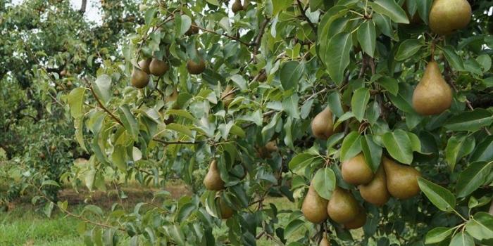 【Bishop's Orchards】 コネチカットの多品種フルーツ狩り