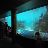 【New York Aquarium】 コニーアイランドビーチ沿いのニューヨーク水族館
